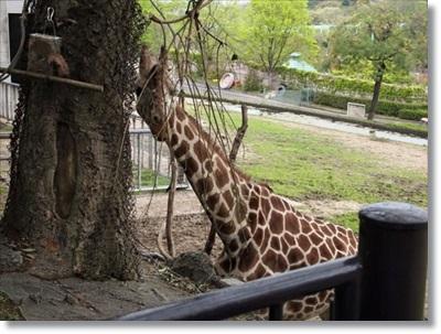東山動物園♪