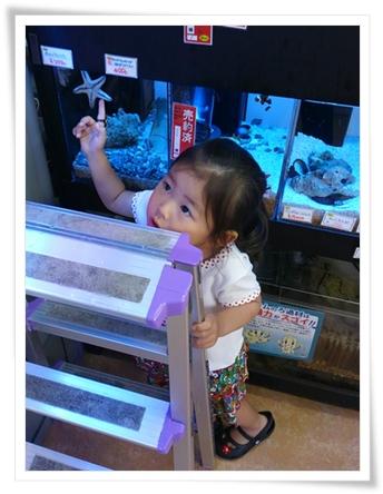 カブ子「流れ星~!」 パパ「いや、それはヒトデだょ^^;」